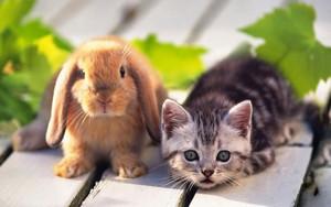 Кролик с котенком