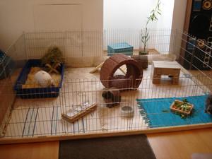 Содержание кролика в вольере