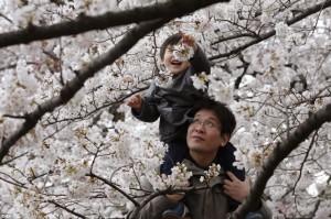 Весенний отдых в Японии