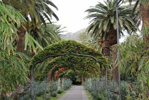 Главные особенности парка Гарсия Санабриа на Канарах
