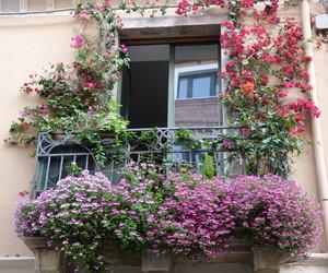 Пеларгония на балконе