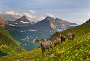 Особенности национального парка Глейшер