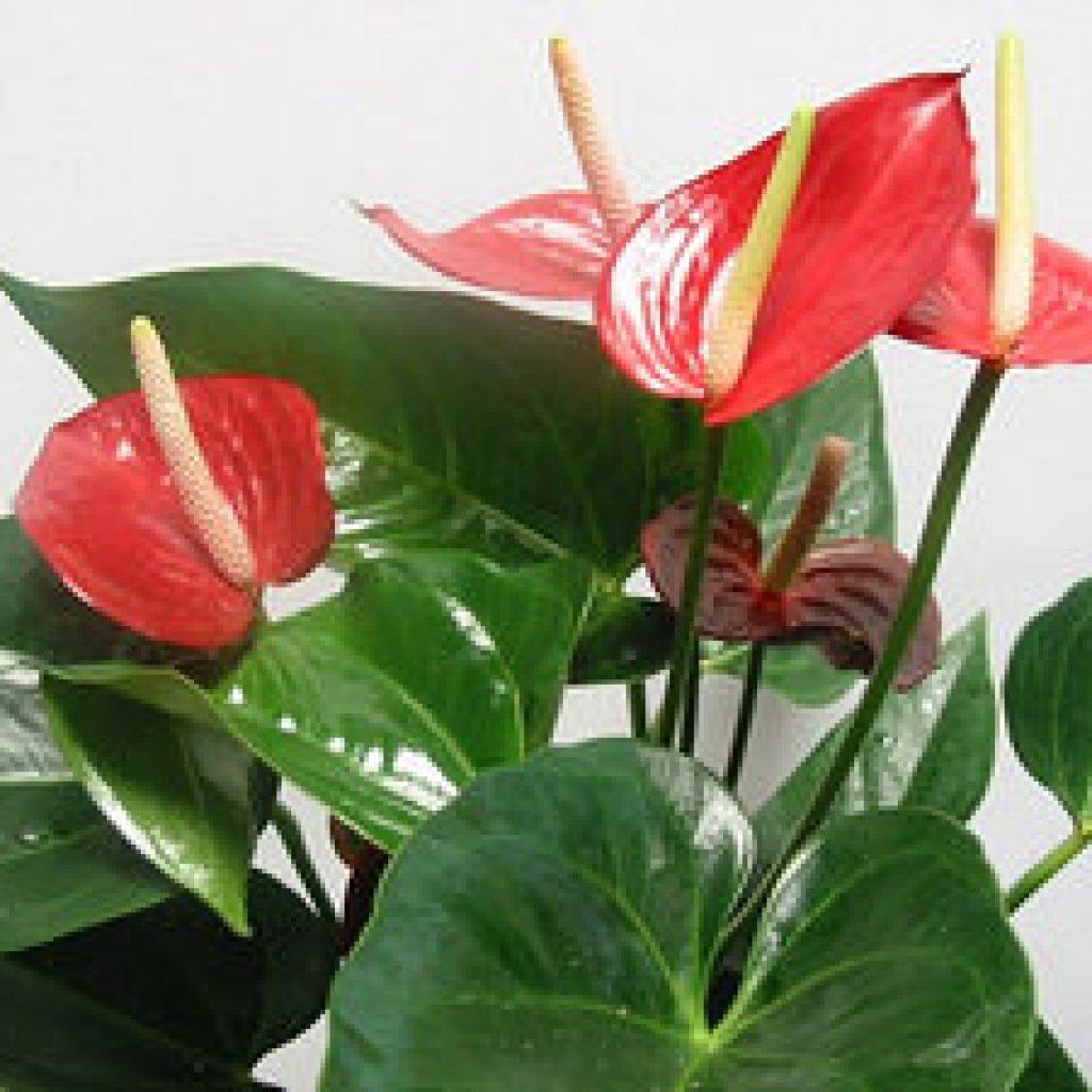 Какие цветы нельзя держать дома фото и описание
