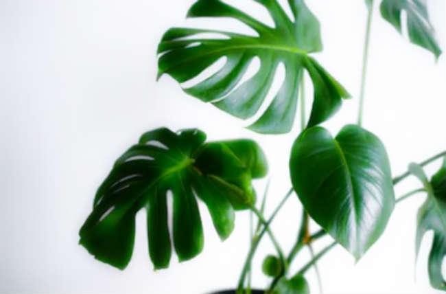 Декоративные комнатные растения в интерьере гостиной